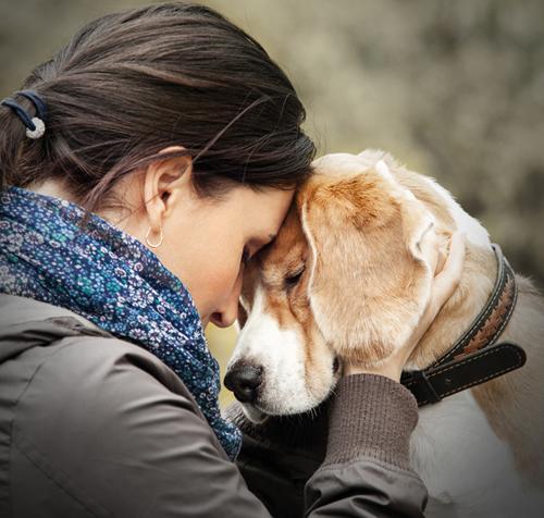 Tierbestattung: – Abschied von einem Haustier, das Freund, Familienmitglied und Spielkamerad war