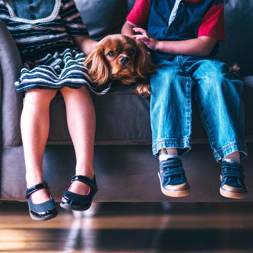 Trauerbegleitung mit Tieren – ein Freund für schwere Zeiten – z. B. ein Hund