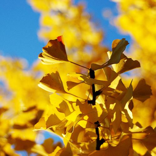 Tree of Life – Baum des Lebens, Naturbestattung als Sinnbild für das Fortbestehen